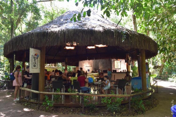 парк птиц бразилия (parque das aves) 17