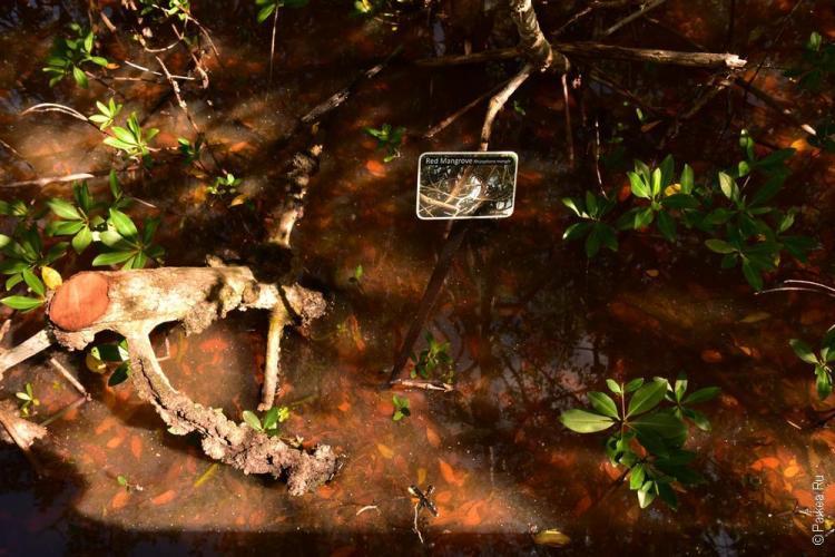 заповедник динг дарлинг на острове санибел, флорида, сша / ding darling national wildlife refuge 29