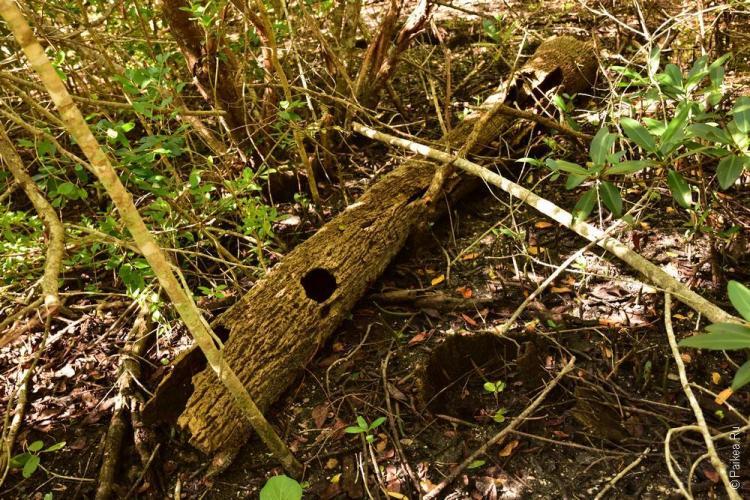 заповедник динг дарлинг на острове санибел, флорида, сша / ding darling national wildlife refuge 31