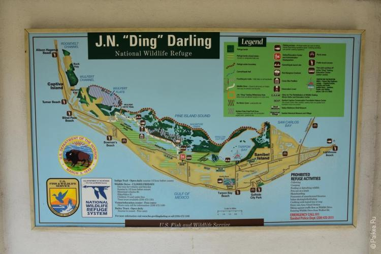 заповедник динг дарлинг на острове санибел, флорида, сша / ding darling national wildlife refuge 38
