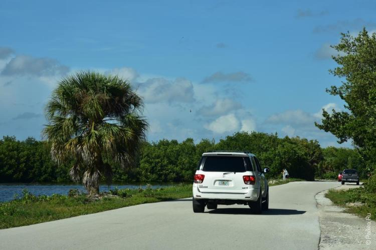 заповедник динг дарлинг на острове санибел, флорида, сша / ding darling national wildlife refuge 62
