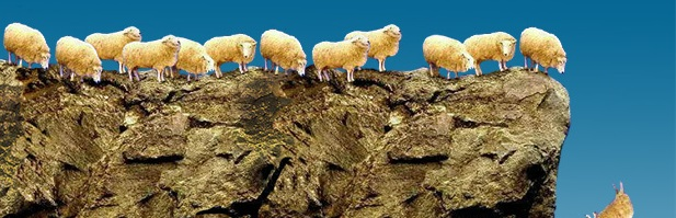 Image result for herd of sheep at cliff