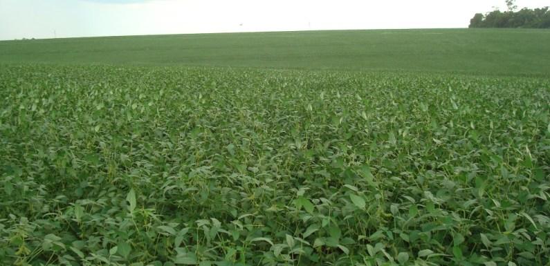 Produtores de soja devem cadastrar lavouras