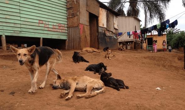 Cães abandonados ameaçam menor aldeia indígena do Brasil