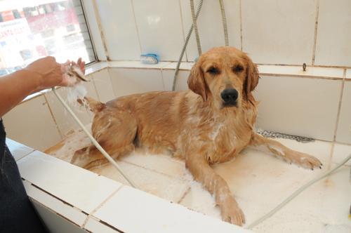 Banho de animais envolvem riscos; veja como evita-los