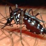 Chikungunya é o maior desafio de saúde pública em 2017, diz ministro
