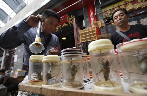 Grilos são vendidos como animais de estimação na China