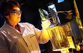 Petrobras investirá R$ 5 milhões para ampliar participação feminina nas áreas de Ciência