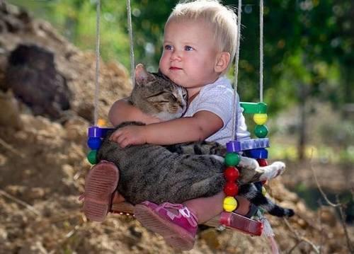 Saiba se você está preparado para ter um gato em casa