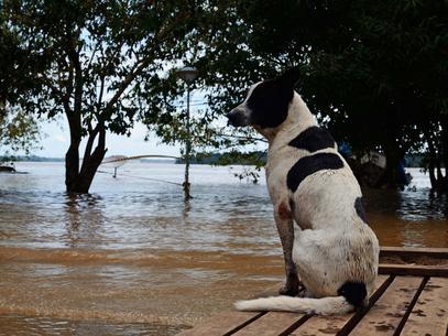 Governo veta projeto do auxílio aluguel para desabrigados da enchente