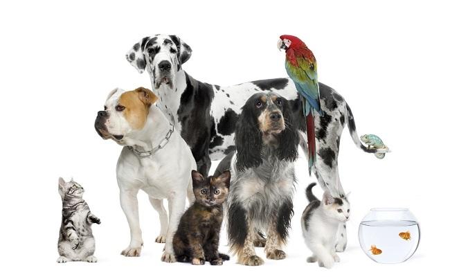 Pensando em ter um animal de estimação e ainda não se decidiu