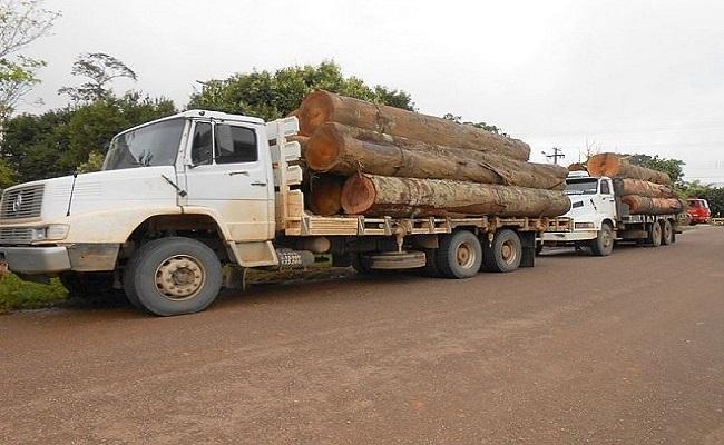 Polícia Ambiental apreende 3 caminhões com madeira ilegal