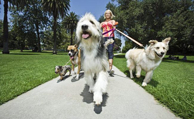 Você sabe passear com seu cão?
