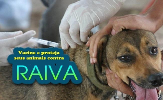 Vacinação contra a raiva será realizada em Porto Velho
