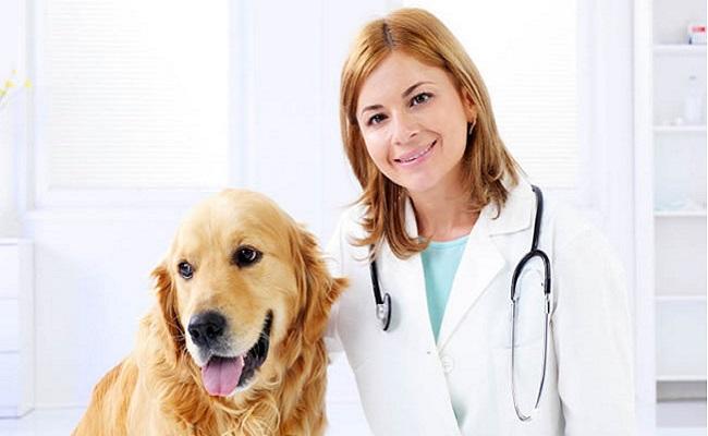 Seu pet já fez check-up?