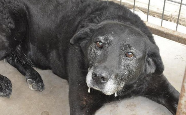 Cadela que viajou 48 km só para ser recusada por seu dono encontrou um novo lar