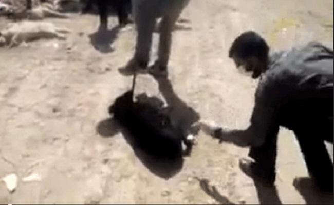 Vídeo de homens matando cães com injeção de ácido causa protestos