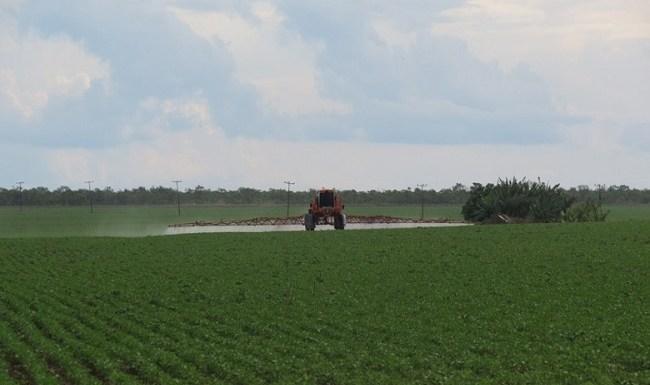 Bayer indenizará perda de produção causada por fungicida defeituoso