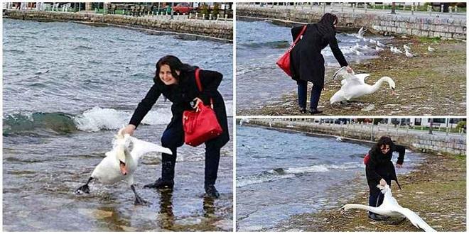 Mulher mata cisne após agarrá-lo pela asa para tirar uma selfie