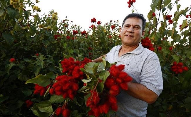 Maurão destaca potencialidade da produção de urucum em Rondônia