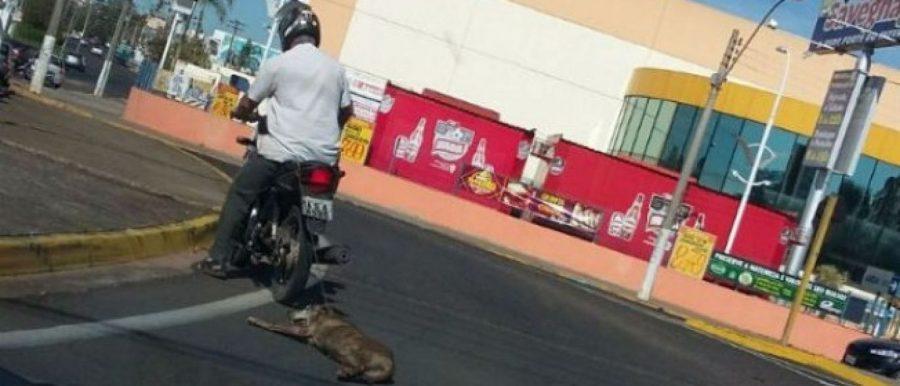 Motociclista é flagrado arrastando cachorro na rua; Polícia investiga o caso