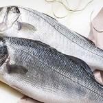 Doença misteriosa causa queda de 70% na venda de peixes em Salvador