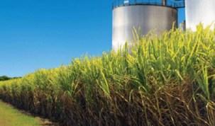 China cancela importações de etanol por ameaça de alta em tarifa