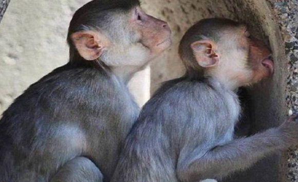Infecção de macaco em zoológico de SP pode ter começado com homem