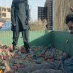 Menino mata prisioneiro em vídeo divulgado pelo Estado Islâmico