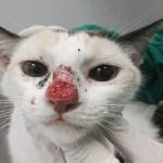 Doença emergente que afeta gatos pode atingir humanos