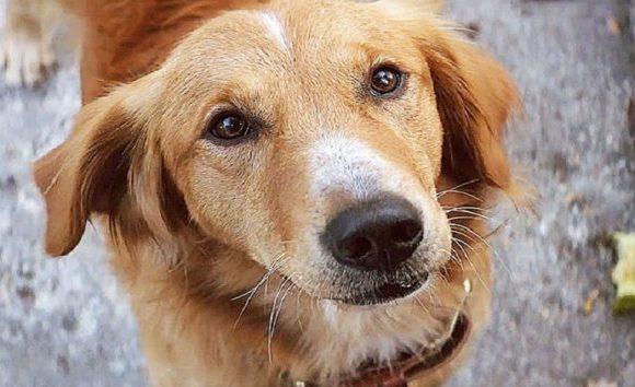 É verdade que cachorros sofrem quando os donos se separam?