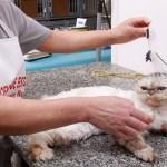 Lei cria política de controle de natalidade de cães e gatos