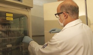 'Doença da urina preta' foi causada por intoxicação após ingestão de peixe, diz estudo