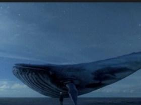 Polícia Civil investiga caso mais grave do jogo Baleia Azul em PE