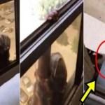 Patroa filma empregada cair de 7º andar e não oferece ajuda; imagens fortes
