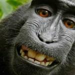 Espécie do 'Macaco da selfie' pode desaparecer na Indonésia