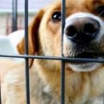 Taiwan surpreende e proíbe o consumo de carnes de cães e gatos