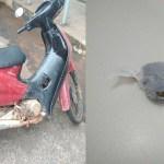 Homem é preso ao chegar em audiência com moto roubada e maconha no bolsoHomem é preso ao chegar em audiência com moto roubada e maconha no bolso