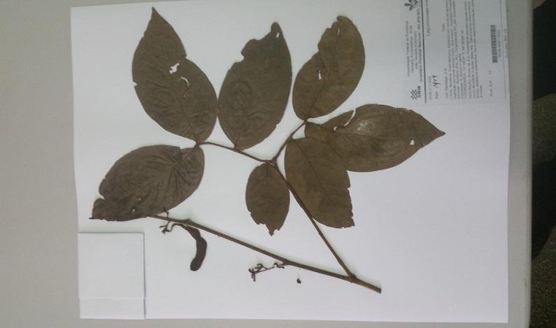 Rondônia tem 10 espécies novas de plantas para serem identificadas até 2020