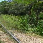Mulher é atropelada por trem ao tentar fazer selfie em Piraquara (PR)