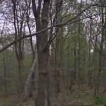 Suposto espírito aparece em foto no meio do bosque e assusta moradores