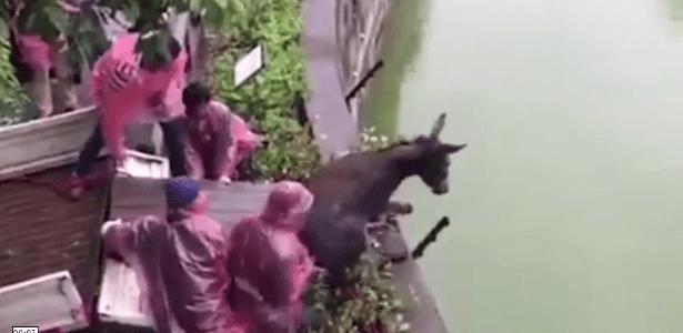 Vídeo em que burro é jogado vivo em jaula de tigres e é devorado choca internautas