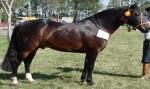 Cavalo morre um mês após ser leiloado por quase R$ 7 milhões no Rio Grande do Sul