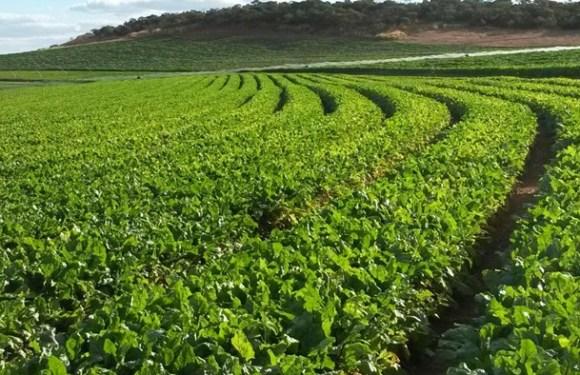 Agricultores de Rondônia podem renegociar dívidas até 29 de dezembro