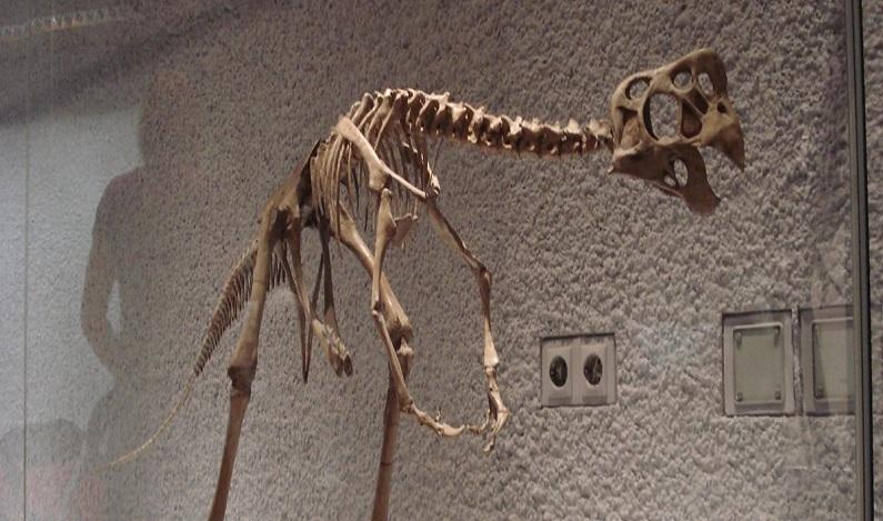 Jovem de 10 anos encontra erro em dinossauro de Museu de História Natural