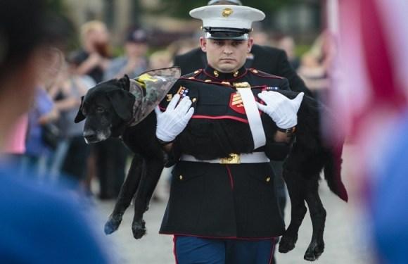 Centenas se despedem de cão fuzileiro dos EUA que serviu 3 vezes no Afeganistão