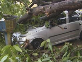 Temporal derruba árvore sobre carros e destrói muro do Denarc em Porto Velho