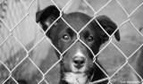 Câmara de Cuiabá aprova lei que protege animais domésticos