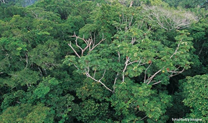 Reserva no AM zera desmatamento e se torna exemplo internacional