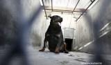 Bebê morre após sofrer ataque de cão da família no interior de SP
